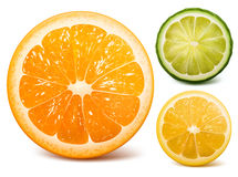 Orange, lime and lemon. Vector citrus fruits: orange, lime and lemon