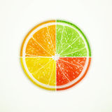 Orange, lime, lemon and grapefruit quartered royalty free illustration