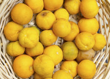 Orange limes Stock Image