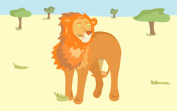 Orange lion in the savanna Royalty Free Stock Photo
