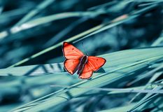 Orange little butterfly sits on the background of a blue beautif Royalty Free Stock Photography