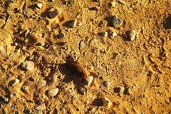 Orange lizard Royalty Free Stock Images