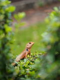 Orange lizard on a plant. In a park royalty free stock images