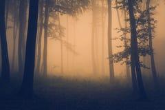 Orange ljus i en mystisk skog med dimma Royaltyfria Bilder