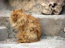 Orange longhair cat dozes on the step Stock Photo