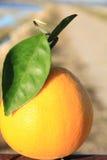 Orange mûre avec la lame verte Image libre de droits