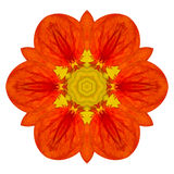 Orange Mandala Flower Kaleidoscopic Isolated on White Stock Photo