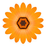 Orange Mandala Flower Ornament. Kaleidoscope Pattern Isolated Royalty Free Stock Photo