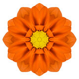 Orange Mandala Gerbera Flower Kaleidoscope Isolated Royalty Free Stock Photo