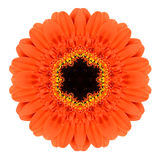 Orange Mandala Gerbera Flower Kaleidoscope Isolated Royalty Free Stock Photography