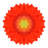 Orange Mandala Gerbera Flower Kaleidoscope Isolated Stock Images