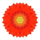 Orange Mandala Gerbera Flower Kaleidoscope Isolated. On White Background stock images