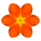Orange Mandala Nasturium Flower Kaleidoscope Isolated Royalty Free Stock Image