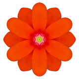 Orange Mandala Primrose Flower Kaleidoscope Isolated Stock Photography
