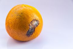 An orange mandarin with a mold ulcer on a white background. Citrus Fruit is rotten. Copy space. Close-up. Citrus Fruit is rotten. An orange mandarin with a mold Stock Photo