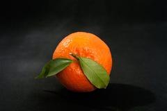 Orange mandarin on pure black background. Royalty Free Stock Images