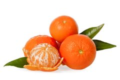 Orange mandarines, clementines, tangerines or small oranges with one peeled with leaves Stock Photography