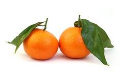 Orange mandarins Stock Image