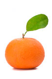 Orange mandarins Royalty Free Stock Photography