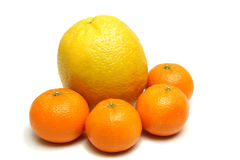Orange and mandarins isolated Stock Image