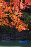Orange Maple in Arashiyama Royalty Free Stock Image