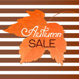 Orange maple leaf. Autumn sale banner on a striped background. Stock Photo