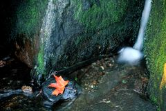 Orange Maple Leaf with Green Moss and Waterfall Royalty Free Stock Photos