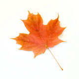 Orange Maple Leaf Isolated on White Royalty Free Stock Photo