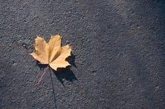 Orange maple leaf lies on the asphalt Royalty Free Stock Photo