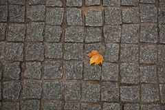 Orange maple leaf lying on the avement Stock Photography