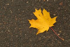 Orange maple leaf on wet asphalt surface. Stock Photo