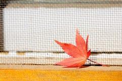 Orange Maple Leaves Stock Image