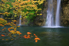 Orange maple leaves against waterfall background Royalty Free Stock Image