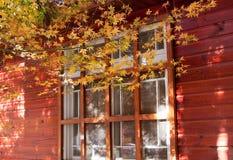 Orange maple tree and leaves Stock Photos