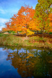 Orange maple tree with reflection Royalty Free Stock Photography