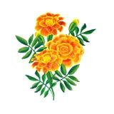 Orange marigold bouquet Stock Image