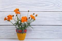 Orange marigold flowers in a yellow vase Royalty Free Stock Photos