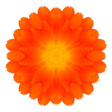 Orange Marigold Mandala Flower Kaleidoscope Isolated on White Royalty Free Stock Photo