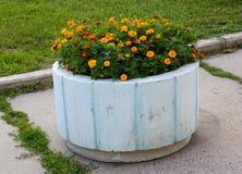 Orange marigolds on a bed of concrete Stock Photo