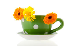 Orange marigolds in green coffee cup Royalty Free Stock Photo