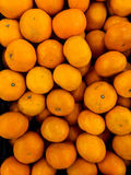 Orange in market. Several oranges in the pickup on the market royalty free stock photos