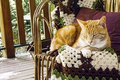 Orange Marmalade Cat On Chair Stock Photos