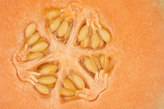 Orange melon kernel in close up Royalty Free Stock Images