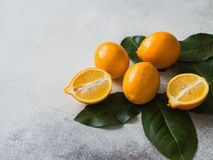 Orange meyeri lemons with green leaves in a group on a gray background. Copy space. Orange meyeri lemons with green leaves in a group on a gray background stock images