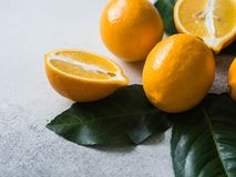 Orange meyeri lemons with green leaves in a group on a gray background. Copy space. Orange meyeri lemons with green leaves in a group on a gray background royalty free stock images