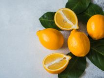 Orange meyeri lemons with green leaves in a group on a gray background. Top view. Copy space. Orange meyeri lemons with green leaves in a group on a gray royalty free stock images