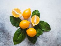 Orange meyeri lemons with green leaves in a group on a gray background. Top view. Copy space. Orange meyeri lemons with green leaves in a group on a gray stock photography