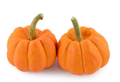 Orange miniature pumpkin Stock Image