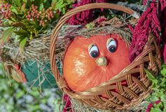 Orange miniatyrpumpa med ögon i en rottingkorg royaltyfri foto