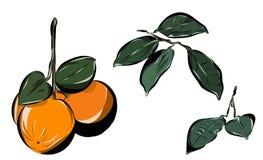 Orange mit Blättern und Niederlassungen Hand gezeichnete vektorabbildung stock abbildung